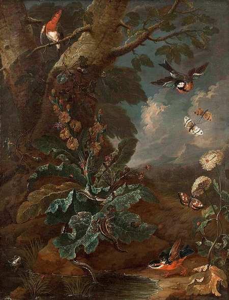 Zákoutí s diviznou, ptáky a motýly